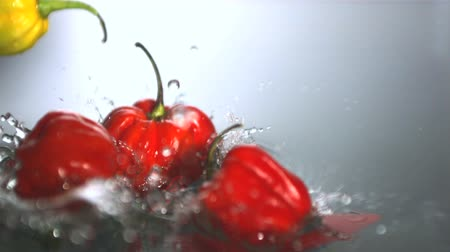 habanero : Chili peppers falling in water in slow motion