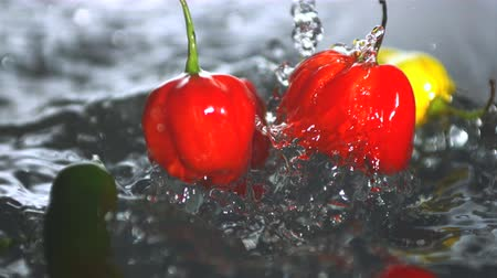 habanero : Many chili peppers falling in water in slow motion Stock Footage