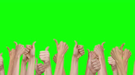 tenso : Many hands showing thumbs up on green screen background