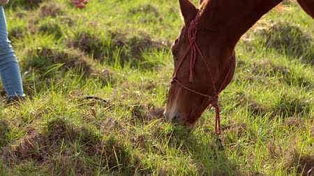 padok : Horse eating grass next to a woman in slow-motion