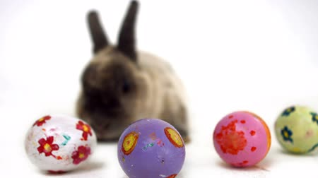 easter : Easter bunny with colourful eggs in ultra hd format