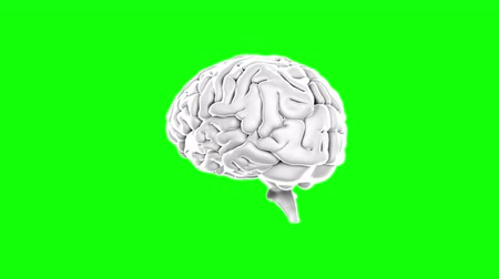 brain : Digital animation of Brain spinning on green screen background Stock Footage