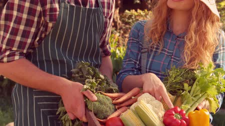 self sufficiency : Happy couple with box of vegetables on a sunny day in slow motion Stock Footage