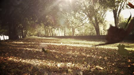 listki : Autumn leaves falling in park Wideo