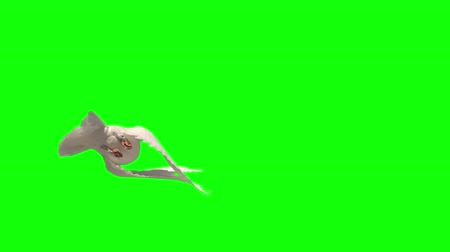 dove of peace : Dove flying on green screen background in slow motion Stock Footage