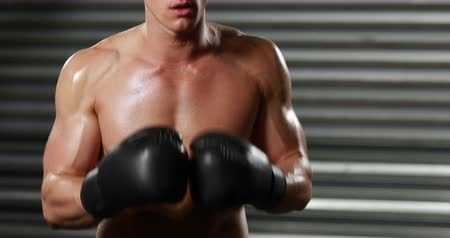 male : Fit boxer ready to fight at the gym