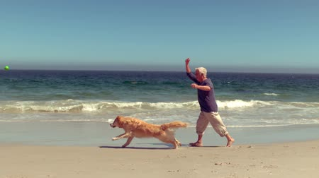 playing with a dog : Cheerful senior man playing with dog on the beach Stock Footage