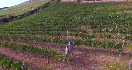 çiftlik : Drone footage of couple walking in wine farm