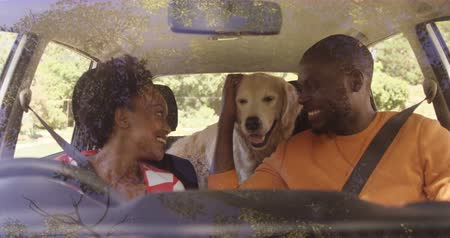 otopark : Cute couple is sitting in the car with it dog on a sunny day Stok Video