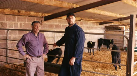 farmer animals : Cattle farmer interacting with a man inside the barn 4k