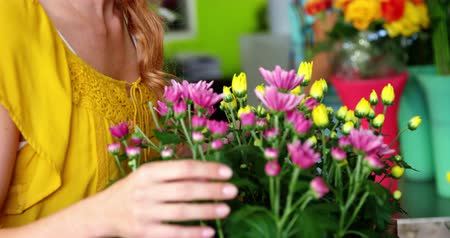 florista : Beautiful female florist arraigning flowers in flower shop Stock Footage