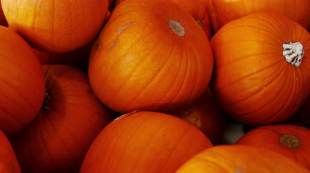 dynia : Close-up of pumpkin in organic section of supermarket 4k