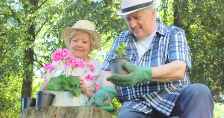 vztahy : Senior couple gardening together in garden on a sunny day