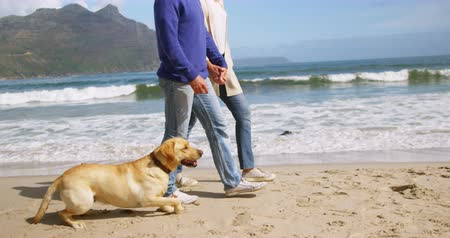 pointing dogs : Happy mature couple walking on beach
