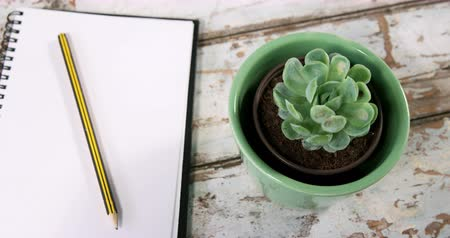 segregator : Aloe vera plant, diary with pencil and binder clips on wooden surface