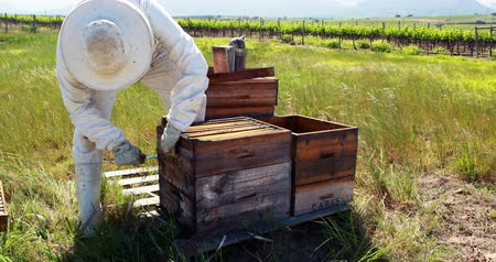 apiary : Beekeeper removing honeycomb from beehive in apiary garden