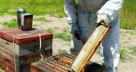 apiary : Beekeeper brushing off the honey bee from honey comb in apiary