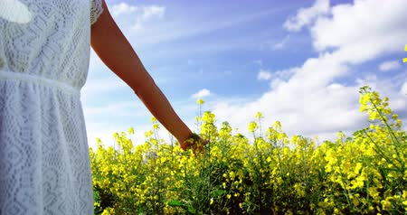 dokunaklı : Mid section of woman walking in mustard field on a sunny day Stok Video