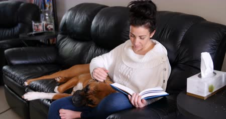 cachorro : Woman reading a novel while dog relaxing on her lap in living room
