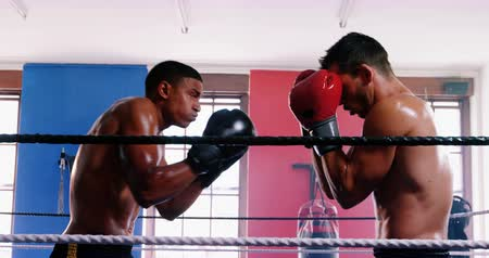 male : Two aggressive boxers fighting in boxing ring