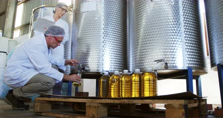 qualidade : Technician examining olive oil in factory