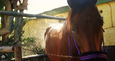 splashed : Horse being washed with water in ranch 4k Stock Footage