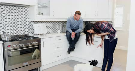 pointing dogs : Couple interacting with pug dog in kitchen 4k Stock Footage