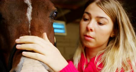 поглаживание : Close-up of woman stroking a horse in stable 4k Стоковые видеозаписи