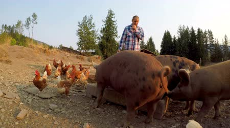 aliment : Farmer feeding pigs and hen in the farm on a sunny day 4k Stock Footage