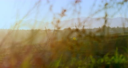 powerline : Two electricity pylons in the field at distance seen through plants 4k Stock Footage