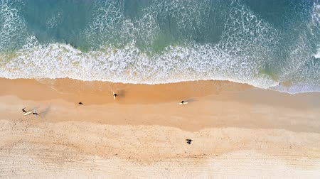 tyrkysový : Aerial of surfers walking on the beach 4k
