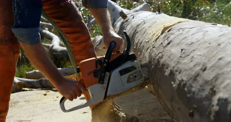 silvicultura : Side view of lumberjack cutting tree with chainsaw 4k Stock Footage
