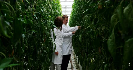 gözlem : Two scientists examining plants in greenhouse 4k