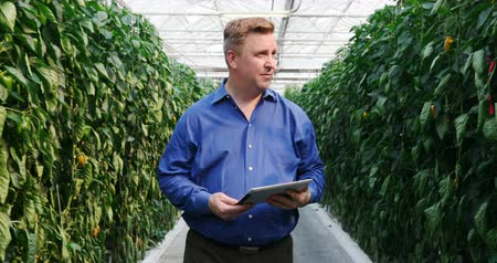 gözlem : Male scientist with digital tablet examining plants in the greenhouse 4k Stok Video