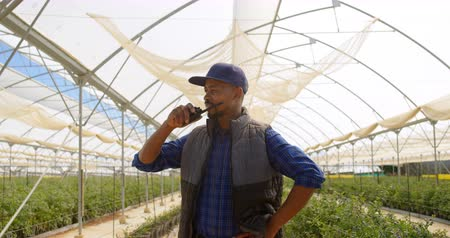 jagoda : Front view of a focused mixed race man talking on walky talky in greenhouse at blueberry farm. Wideo