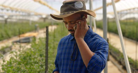 jardinero : Mixed race man with a hat talking on mobile phone in greenhouse at blueberry farm. Serious looking down.