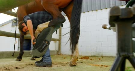 alicate : Distant low angle view of woman polishing horseshoes while holding horse leg at stable.