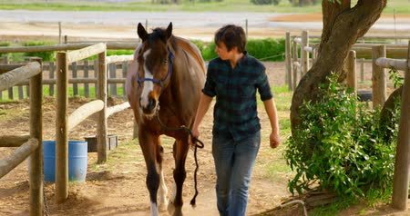 konie : Front view of young woman walking with horse in stable. She caring for equine in the ranch in countryside.