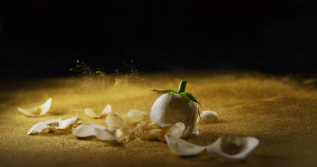 rózsák : White rose and petals falling on the glitter. Golden glitter splashing in the air 4k Stock mozgókép