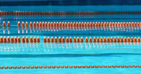 shellfish : Lanes of a competition swimming pool. Empty swimming pool with lane marker 4k