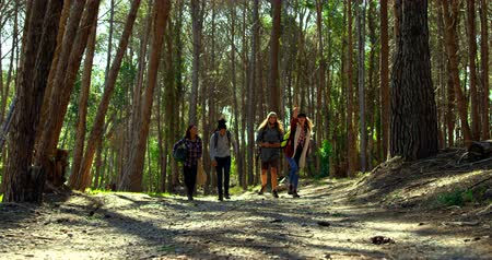 bosque : Group of friends camping in the forest. Friends walking together in the forest 4k Stock Footage
