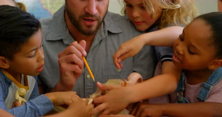 inclusive : Front view of diverse group of school children studying anatomy in classroom with teacher at desk. Caucasian male teacher explaining anatomical model 4k Stock Footage