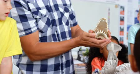 benches : Mid section of male teacher explaining animal skeleton model in the classroom. They are looking at skeleton 4k