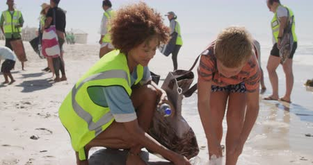 voluntary : Front view of Caucasian boy helping female volunteer in cleaning beach. They are picking up trash 4k