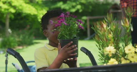 flowerpots : Front view of an African American boy in the garden, standing next to a wheelbarrow holding a potted plant with purple flowers and smiling, slow motion