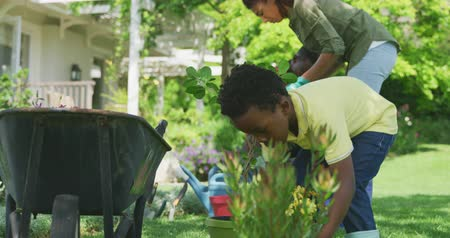 el arabası : Front view of an African American boy in the garden, putting a potted plant on the ground beside a wheelbarrow, his parents gardening in the background, slow motion
