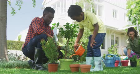 ajoelhado : Low angle front view of an African American man and his young son in the garden, the son using a watering can to water potted plants on the ground, his mother kneeling gardening in the background, slow motion