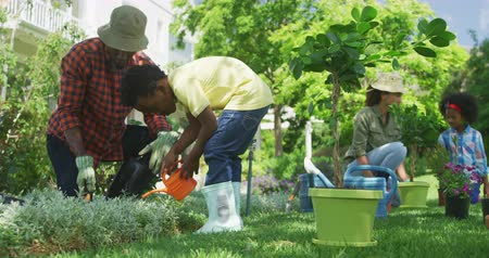 konewka : Side view of an African American man and his young son in the garden, digging and watering plants together, the mother and young daughter gardening in the background, slow motion Wideo