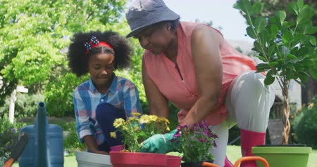 ajoelhado : Front view of a senior African American woman and her young granddaughter in the garden, kneeling down and tending to plants, slow motion