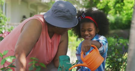 ajoelhado : Side view close up of a senior African American woman and her young granddaughter in the garden, kneeling down and tending to plants, the granddaughter using a watering can, slow motion